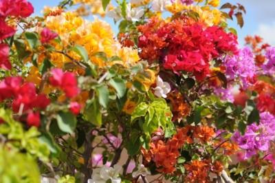 Flowers Terrace Marrakech-Riyad El Cadi